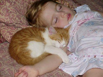 寝ている子猫と赤ちゃん