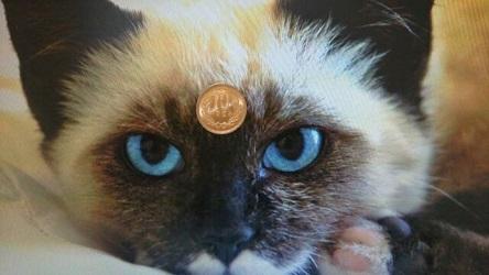 10円ハゲに気づいたネコ